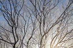 Geada em uma árvore fotografia de stock royalty free