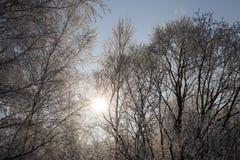 Geada nos ramos das árvores Foto de Stock