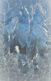 Geada Sparkling do inverno em um indicador Fotos de Stock Royalty Free