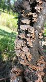 Gealterte Pilze auf Baum stockfotografie
