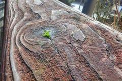 Gealterte schmutzige Planke des Holzes Stockfotos