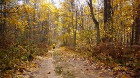 Gealterter sportlicher Frauenstoß im Herbstwald stock footage