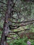 Gealtertes Holz Stockfoto