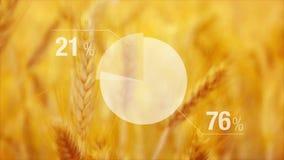Geanimeerde Grafiek voor Tarweopbrengst op Landbouw gecultiveerd gebied stock footage