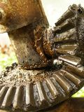 Gear. Wet gear covered with grease Stock Images