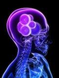 Gears in brain stock illustration