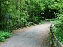 Geasfalteerde weg door het bos royalty-vrije stock fotografie