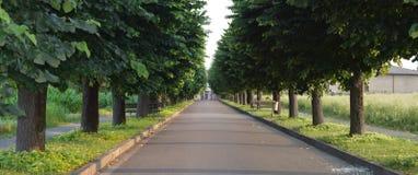 Geasfalteerde weg met tree-lined straat Stock Foto