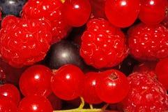 Geassorteerde bessen (frambozen, zwarte en rode aalbessen) als backgr Royalty-vrije Stock Foto