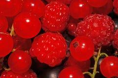 Geassorteerde bessen (frambozen, zwarte en rode aalbessen) extreem c Royalty-vrije Stock Afbeelding