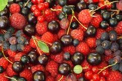 Geassorteerde bessen (frambozen, zwarte en rode aalbessen, Saskatoon Stock Fotografie