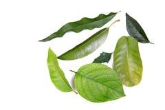 Geassorteerde bladeren Stock Afbeeldingen