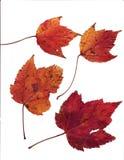 Geassorteerde bladeren stock foto's