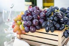Geassorteerde Druiven royalty-vrije stock afbeeldingen