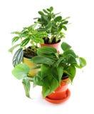 Geassorteerde houseplants royalty-vrije stock foto's