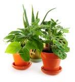 Geassorteerde houseplants royalty-vrije stock afbeeldingen