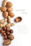 Geassorteerde notenamandel, hazelnoot, okkernoot en pinda Royalty-vrije Stock Fotografie