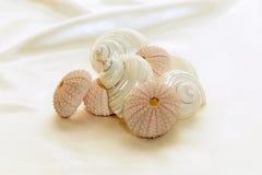 Geassorteerde shells Royalty-vrije Stock Afbeeldingen