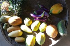 Geassorteerde tropische vruchten in de ochtendzonneschijn Royalty-vrije Stock Fotografie