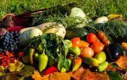 Geassorteerde tuin Stock Foto's