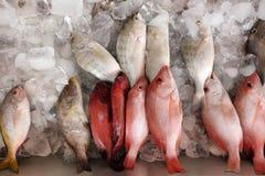 Geassorteerde verse die vissen op ijs worden opgeslagen Stock Foto
