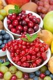 Geassorteerde verticale vruchten en bessen, Royalty-vrije Stock Afbeelding
