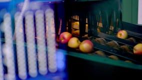 Geautomatiseerd materiaal in een fabriek voor was, het drogen en het sorteren appelen Rijpe appelen die door grootte en kleur sor stock video