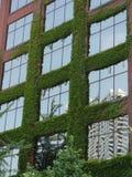 Gebäude abgedeckt mit Blättern/Grün lizenzfreie stockbilder