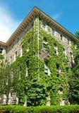 Gebäude bedeckt im Efeu Lizenzfreie Stockfotos