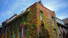 Gebäude eingewickelt durch Vegetation Stockfoto