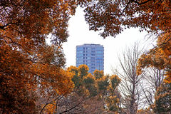 GEBÄUDE GESTALTET DURCH HERBSTLAUB IN TOKYO Lizenzfreies Stockbild