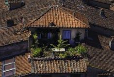 Gebäude mit roten Dächern in Lucca, Italien stockbild