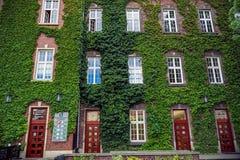 Gebäude mit vielen Windows und Weinberg Lizenzfreie Stockfotos