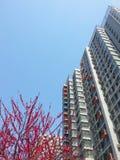 Gebäude und Blumen Lizenzfreies Stockfoto
