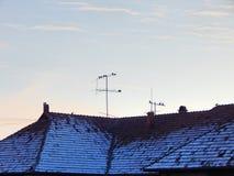 Gebäudedach mit Schnee und Vögel, die auf dem Blitzableiter stillstehen Lizenzfreies Stockfoto