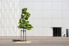 Gebäudeeingang Lizenzfreies Stockfoto
