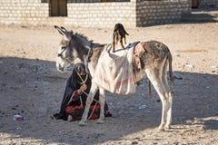 Gebürtige arabische Frau mit Esel und Ziege Stockfoto
