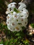 Gebürtige Blumen Stockbild