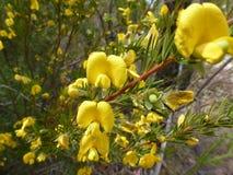 Gebürtige Blumen Lizenzfreies Stockfoto