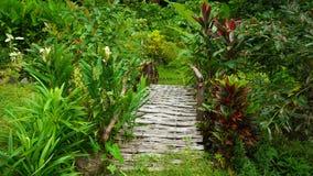 Gebürtige Brücke im philippinischen Dschungel lizenzfreies stockfoto