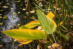 Gebürtige Vegetation auf dem Ufer der Lagune lizenzfreies stockbild