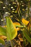 Gebürtige Vegetation auf dem Ufer der Lagune lizenzfreie stockbilder