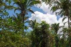 Gebürtige Vegetation Brasilien stockbild