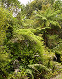 Gebürtiger Wald Stockfotografie