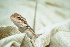 Gebaard Dragon Looking bij u stock afbeelding
