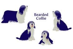 Gebaarde Collie of Tibetaans Terrier Stock Foto's