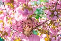 Gebaarde mens met modieus kapsel met sakurabloemen op achtergrond Mens met baard en snor op het glimlachen gezicht dichtbij royalty-vrije stock foto