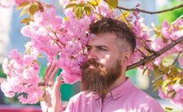 Gebaarde mens met modieus kapsel met sakurabloemen op achtergrond Mens met baard en snor op strikt gezicht dichtbij stock foto's