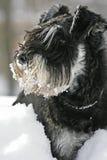 Gebaarde sneeuw Royalty-vrije Stock Foto