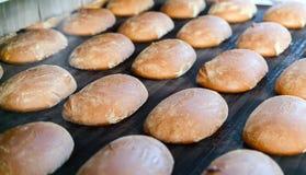 Gebackene Brote auf der Fertigungsstraße an der Bäckerei Lizenzfreies Stockfoto
